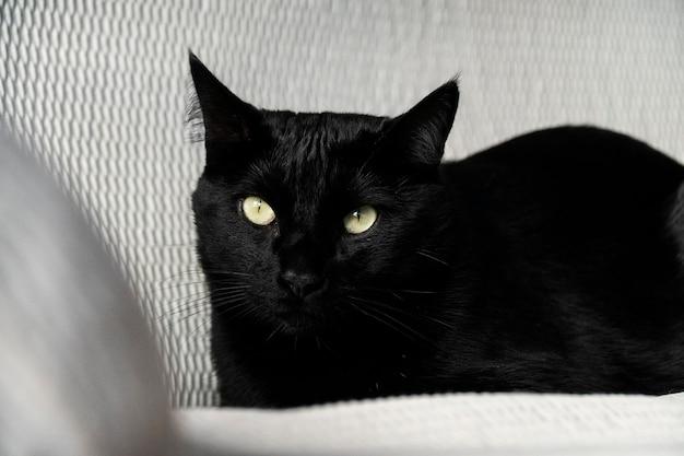 Czarny kot odpoczywa na kanapie