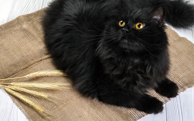 Czarny kot reklama łodygi pszenicy na drewnianym tle