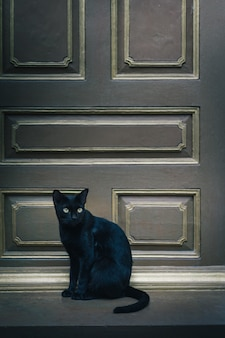 Czarny kot siedzi na drzwiach i wygląda