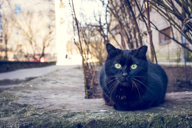 Czarny kot siedzi na zewnątrz obok budynku i drzew