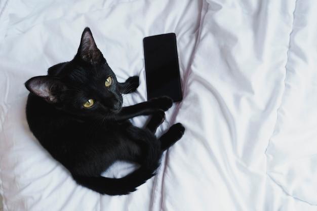 Czarny kot siedzi patrzeć na aparat na białym łóżku z telefonem z czarnym pustym ekranem.