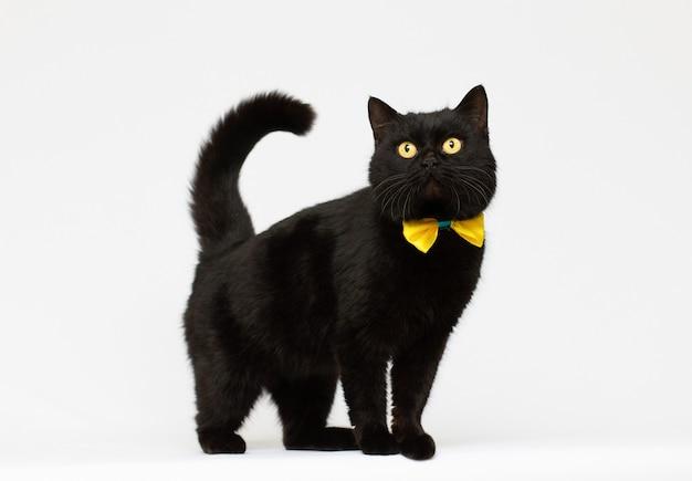 Czarny kot sobie złoty łuk na białym tle