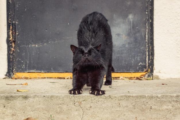 Czarny kot uliczny na tle metalowych drzwi schodzi po schodach i przeciąga się.