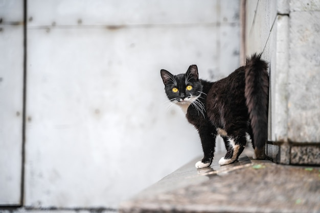Czarny kot uliczny patrzy w kamerę