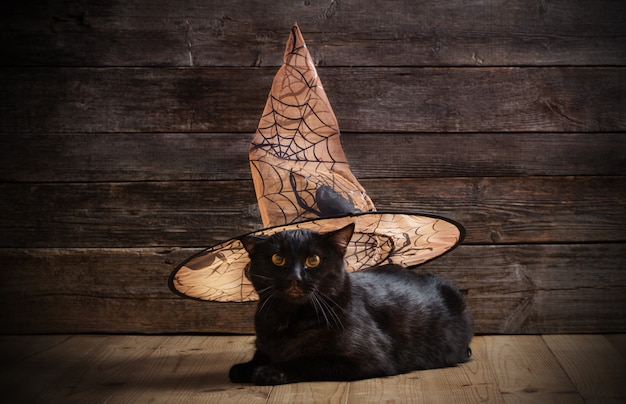 Czarny kot w czarownica kapeluszu na drewnianym tle