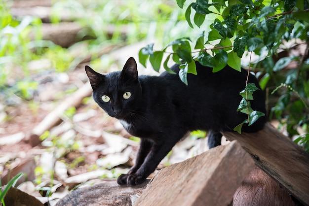 Czarny kot w lesie na drewnie