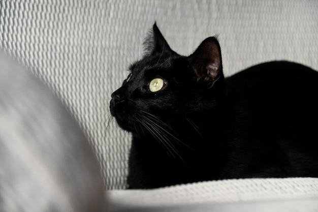 Czarny kot wpatrzony w kanapę