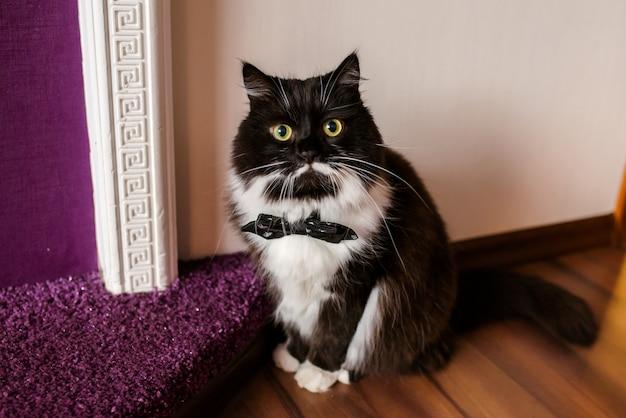 Czarny kot z białą skrzynią w krawacie.