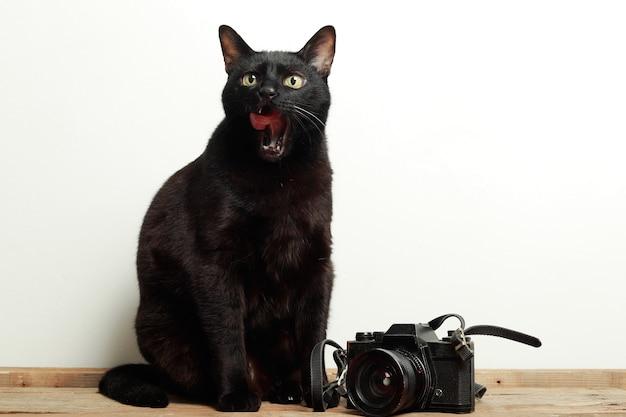 Czarny kot z wysuniętym językiem obok retro aparatu
