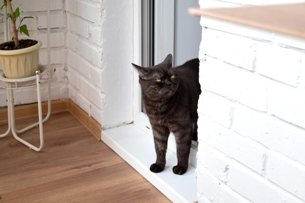 Czarny kot z zaspanymi oczami wchodzi do pokoju