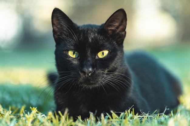 Czarny kot z zielonymi oczami odpoczywa na trawie