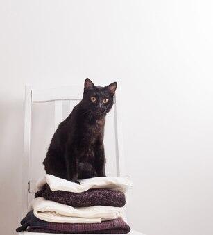 Czarny kot z zimowymi ubraniami na krześle