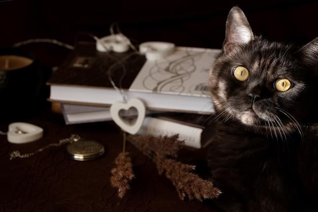 Czarny kot z żółtymi oczami bawi się wystrojem wnętrz na ciemnej powierzchni. przytulna koncepcja domu i hygge