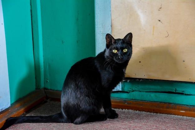 Czarny kot z żółtymi oczami siedzący na dywanie.