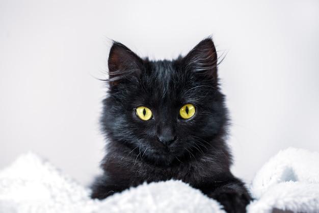 Czarny kotek leży na kanapie poziomo.