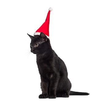 Czarny kotek siedzi i ubrany w santa hat przed białym