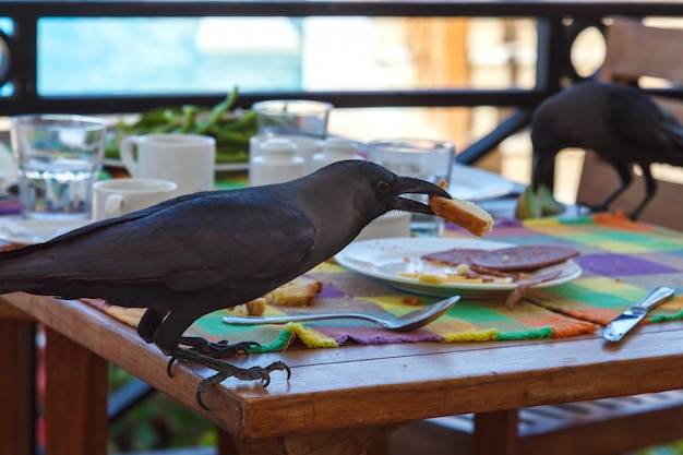 Czarny kruk kradnie jedzenie ze stołu w kawiarni