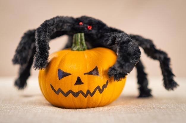 Czarny kudłaty pająk z czerwonymi oczami siedzi na dyni halloween.