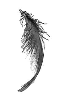 Czarny łabędź pióro na białym tle isoleted