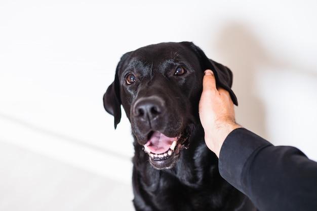 Czarny labrador i jego właściciel w domu. pojęcie przyjaźni. mężczyzna pieści swojego psa