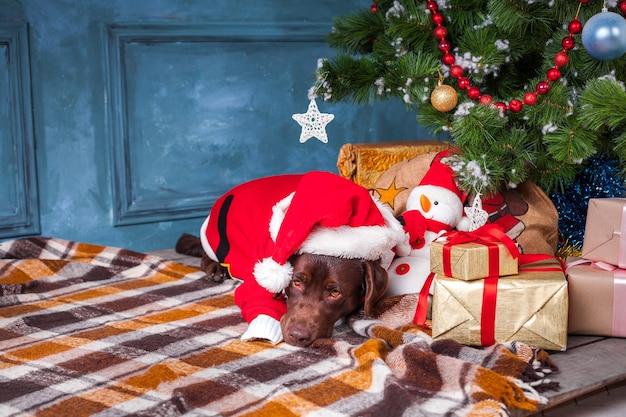 Czarny labrador retriever leżący z prezentami na tle ozdób choinkowych