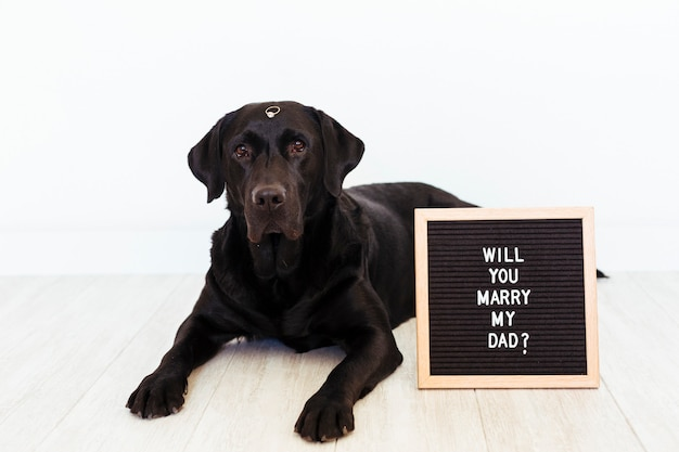 Czarny labrador z tablicą i pierścieniem. koncepcja ślubu