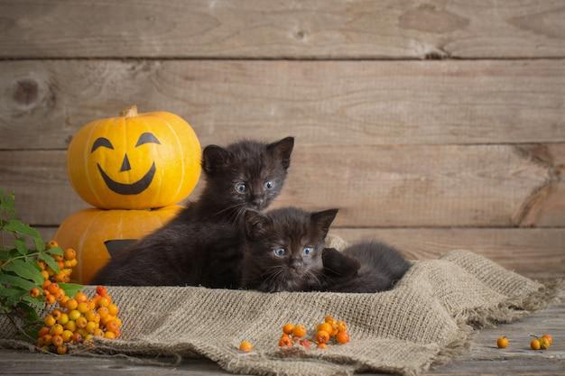 Czarny mały kot z dyniami halloween