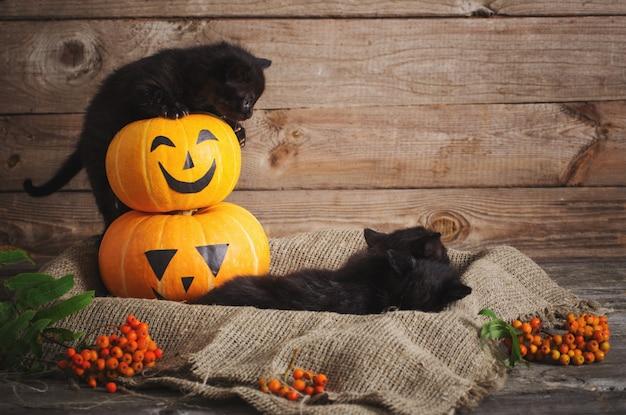 Czarny mały kot z halloweenowymi dyniami