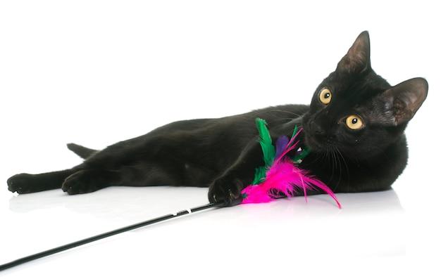 Czarny młody kot gra