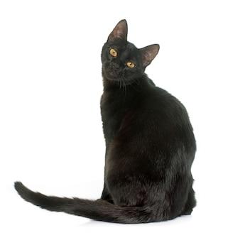 Czarny młody kot