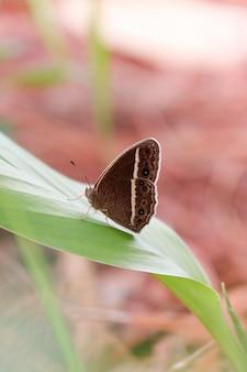 Czarny motyl na brąz zieleni liściu