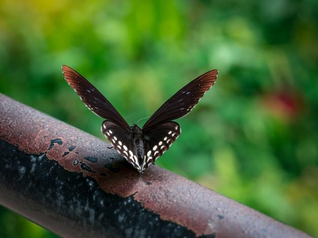 Czarny motyl na starym żelaznym barze przy parkiem