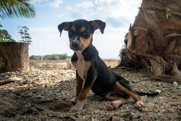 Czarny pies odpoczywa na plaży na wyspie nad morzem pod palmą na tle pięknego egzotycznego krajobrazu z błękitnym niebem. ładne, słodkie, ładne, cudowne, dobre