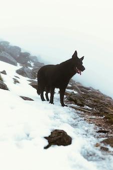 Czarny pies stojący na śniegu