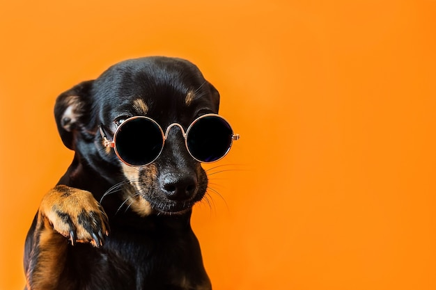Czarny pies w okularach na czerwonej powierzchni