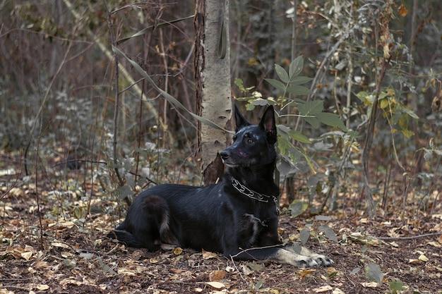 Czarny pies z makijażem na halloween w ponurym lesie