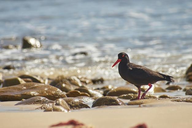 Czarny ptak na skale w pobliżu akwenu w ciągu dnia