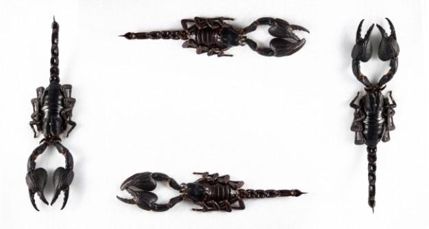 Czarny skorpion ramka