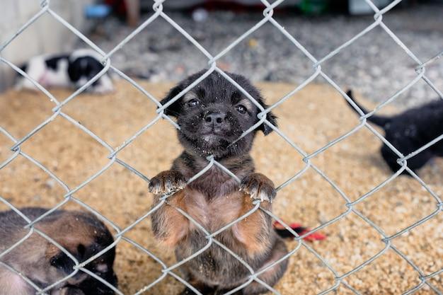 Czarny szczeniak o biednej twarzy trzyma się patrząc w klatce