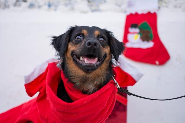 Czarny szczeniak ubrany jak święty mikołaj w śniegu na boże narodzenie.