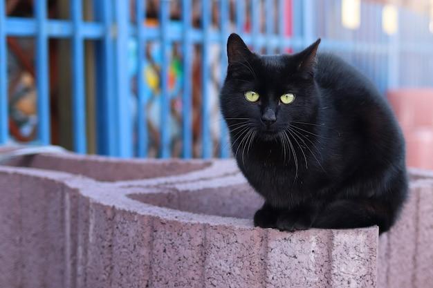 Czarny uliczny kot siedzi na budowie z pogodnym blaskiem