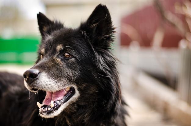 Czarny uśmiechnięty pies