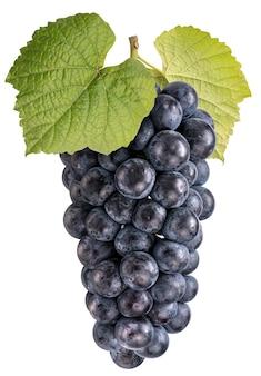 Czarny winogron lub winogron kyoho z liśćmi na białym tle.