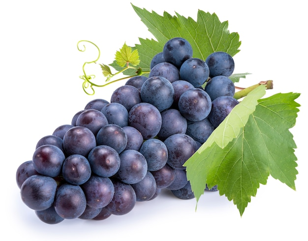 Czarny winogron winorośli z liśćmi na białym tle na białej przestrzeni.