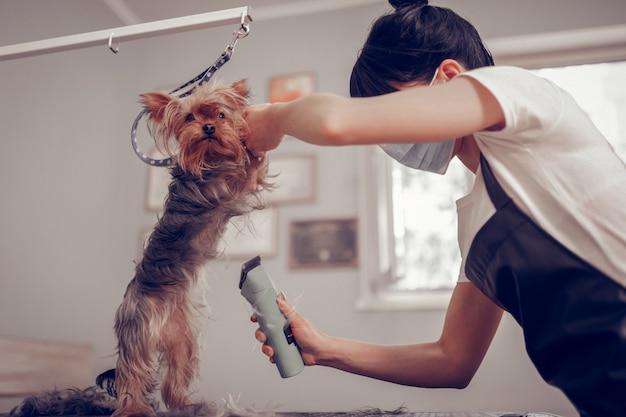 Czas na pielęgnację. ciemnowłosa, ciężko pracująca kobieta ubrana w mundur, używająca golarki elektrycznej podczas pielęgnacji psa