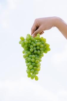 Czas żniw, świeża kiść winogron w ludzkiej dłoni. dojrzałe, soczyste winogrona na tle nieba