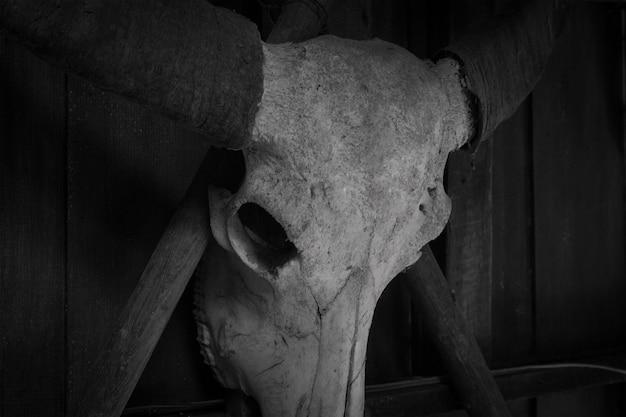 Czaszka bawoła z rogami zwierząt czarno-biała w stylu horroru