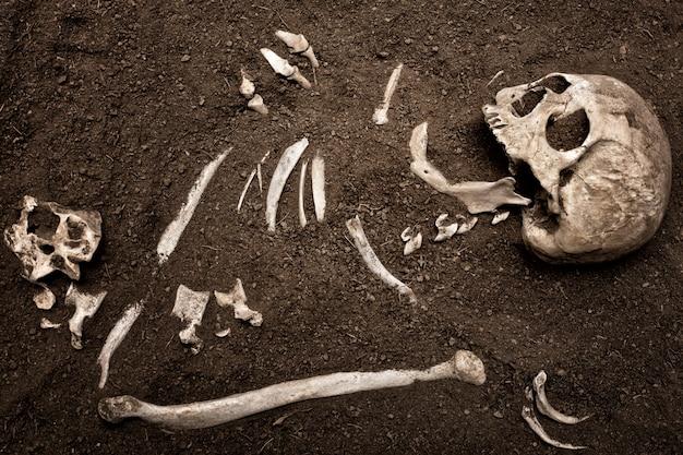 Czaszka i kość