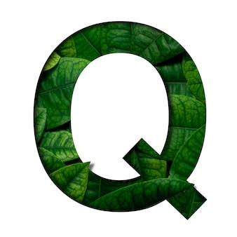 Czcionka liści q wykonana z żywych liści real z wyciętym papierem w kształcie wyciętego papieru precious. czcionka leafs.