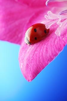 Czerwona biedronka na kwiat echinacea, biedronka skrada się na łodydze rośliny wiosną w ogrodzie w lecie